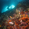 "Indonesia - Raja Ampat Misool Scuba Diving : Located at the heart of the coral triangle and hailed as the most diverse reef system in the world, Raja Ampat really exceeded all my expectations.  The lush coral gardens and abundant marine life make every dive special and immensely enjoyable.  It's a privilege to see the underwater seascape there and I only wish to return soon.  Kudos to everyone at MER for their conservation effort, especially for setting up the ""no take zone"" since 2006.  Let's hope Raja Ampat stays magical forever!"
